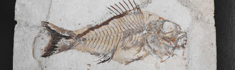 Collezione paleontologica