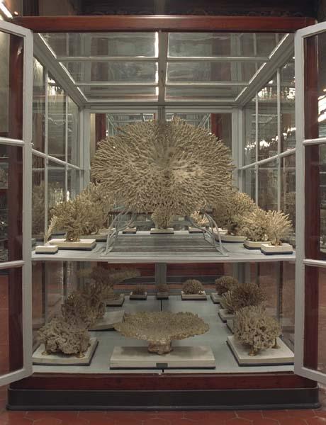 Vetrina di cnidari