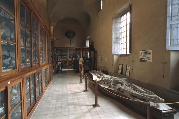 Galleria della sistematica